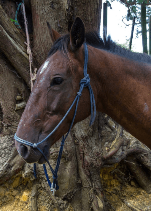 Tips for getting rid of mud fever or rain scald in horses